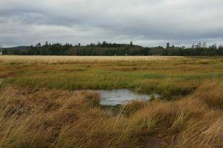 alg Delkatla Landscape